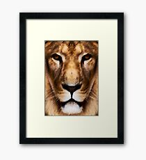 Animal King Framed Print