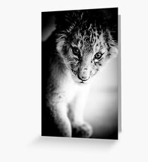 Lion Cub Portrait Greeting Card