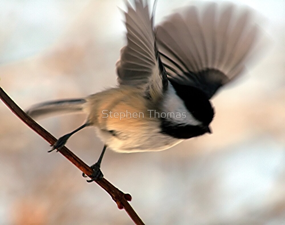 I'll Fly Away by Stephen Thomas