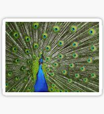 Peacock wide Sticker
