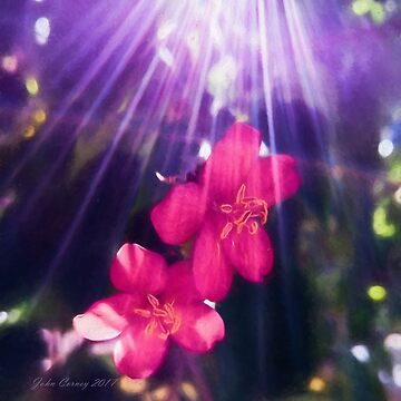 Lightstreams and Pink Floral by JohnCorney