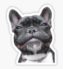 Frenchie Smile Sticker