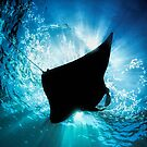 Manta Silhouette by Henry Jager