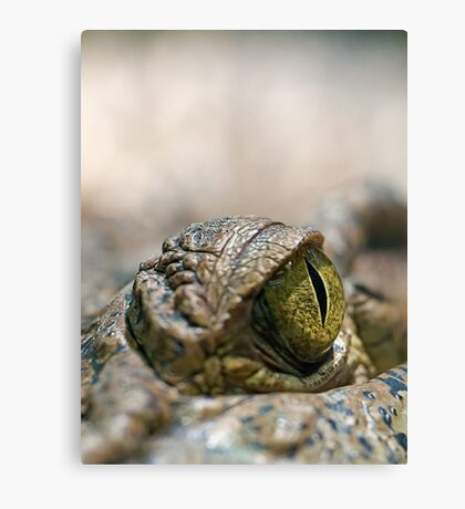 Crocodile's Eye Canvas Print