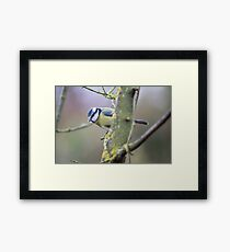 Hide and seek Framed Print