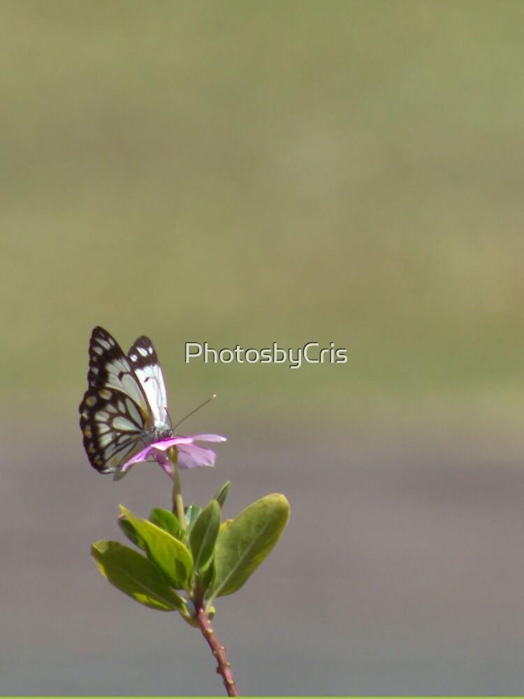 Butterfly by PhotosbyCris