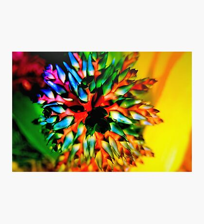 Bromeliad color wheel Photographic Print