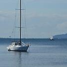 Lone Sail by Judy Woodman