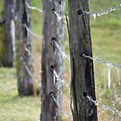 Fence Posts by TheaShutterbug