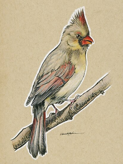state bird series illinois northern cardinal posters by