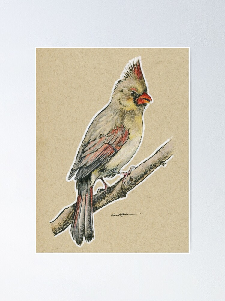 State Bird Series Illinois Northern Cardinal Poster By Theartingsofme Redbubble