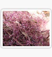 Pink Seaweed Sticker