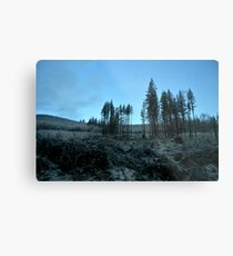 Trees | Washington PNW Metal Print