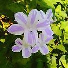 White and purple flowers by ashishagarwal74