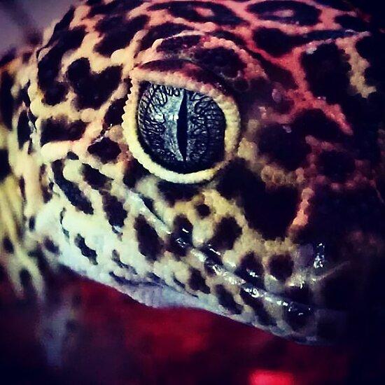 Leopard Gecko by KBachman