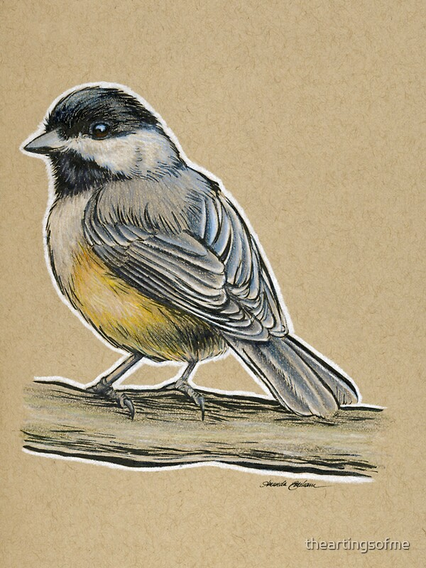 State bird series massachusetts black capped chickadee by theartingsofme