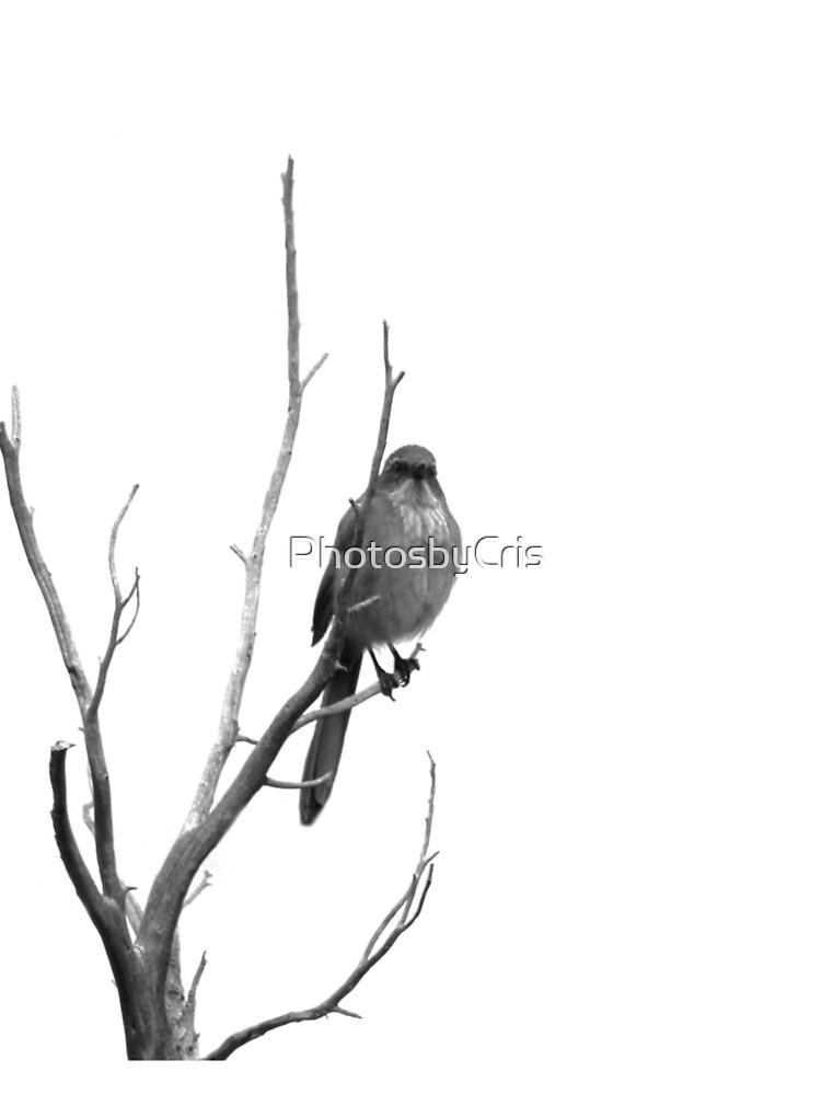 Bird by PhotosbyCris