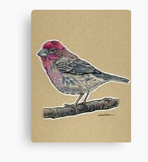 State Bird Series:  New Hampshire - Purple Finch Canvas Print