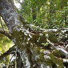 Oliver Creek, Daintree Rainforest by David Wachenfeld