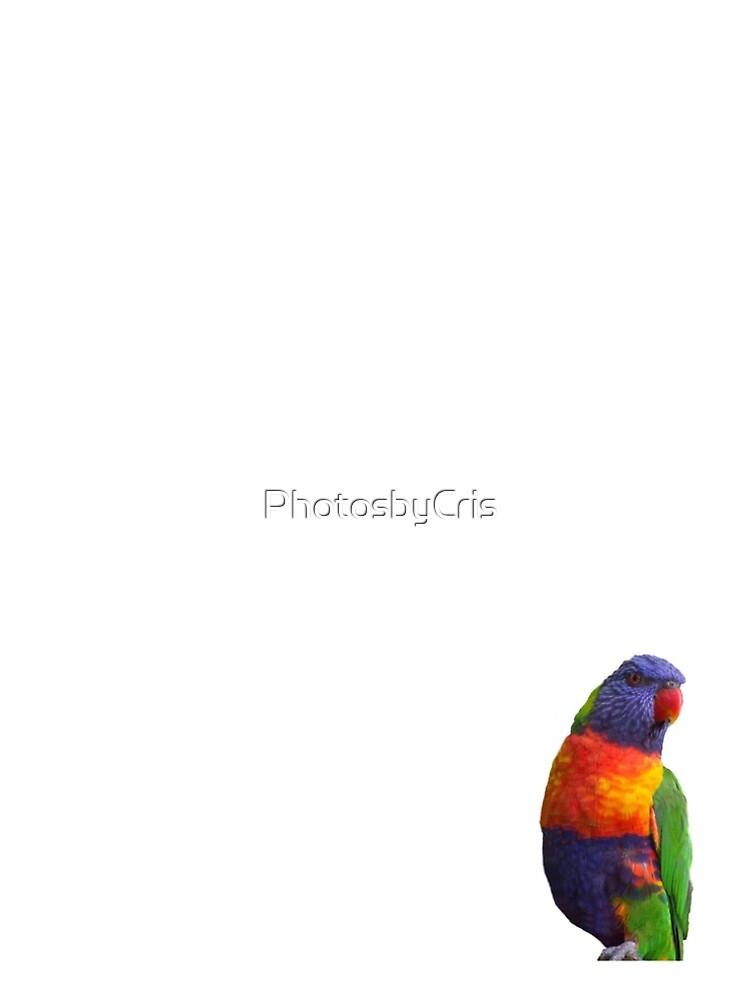 Rainbow Lorikeet by PhotosbyCris