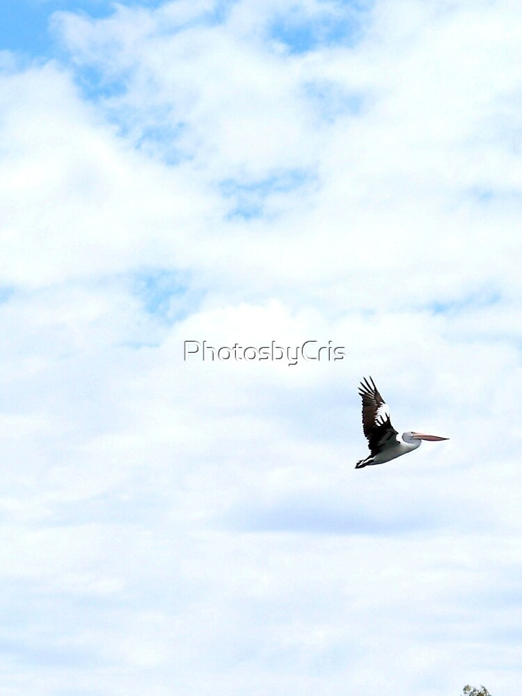 Pelican by PhotosbyCris