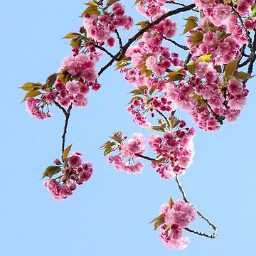 Blossom by VectaSelecta