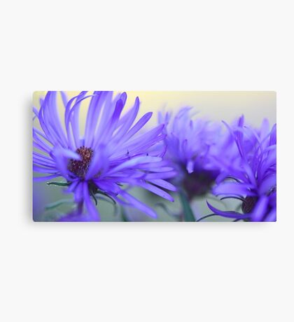 New England Fall Asters - OnThe Wild Side  Canvas Print