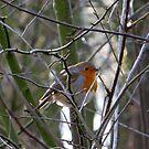 Little Robin by ienemien