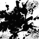 Black Splat by Printpix