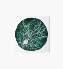 Dendritic tree and spines of an hippocampal neuron - Nebula Art Board Print