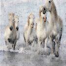 Wild Horses by DavidWHughes