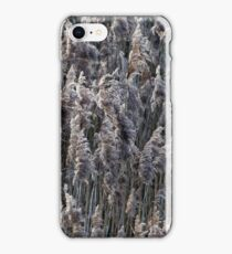 Old reed grass on a winter day. iPhone Case/Skin