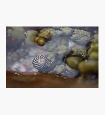 Seaside; Sea Snail Photographic Print