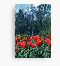 Kodachrome Tulips Canvas Print