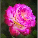 For the Love of Roses by Celeste Mookherjee