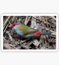 Red Browed Finch Sticker