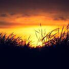 Dawn Grass by IanMcGregor