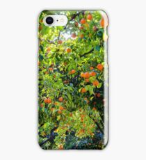 Oranges in Seville - Spain  iPhone Case/Skin