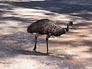 Depressed Emu by Elaine Teague
