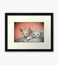 kitties Framed Print