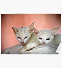 kitties Poster