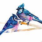 Blue jays by Maja Wrońska