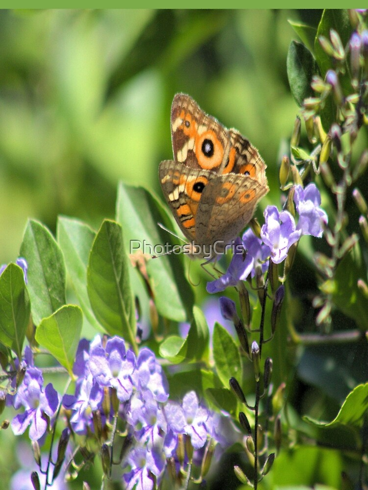 A Beautiful Butterfly by PhotosbyCris