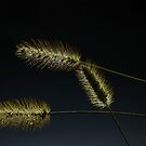 Seeds of Life by CL--Photography