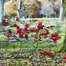 Maple Tree  JFK Arboretum, Co. Wexford, Ireland  by David Carton