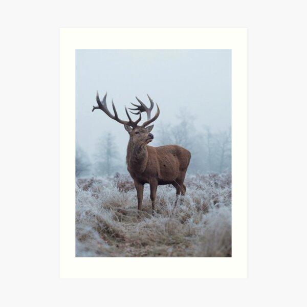 Monarch in a field of white Art Print