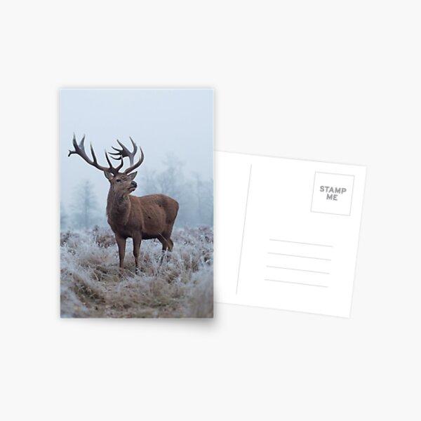 Monarch in a field of white Postcard