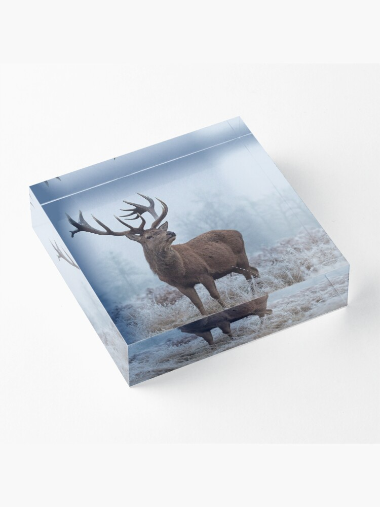 Alternate view of Monarch in a field of white Acrylic Block