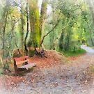The way through the woods, JFK Memorial Arboretum, Co. Wexford, Ireland by David Carton
