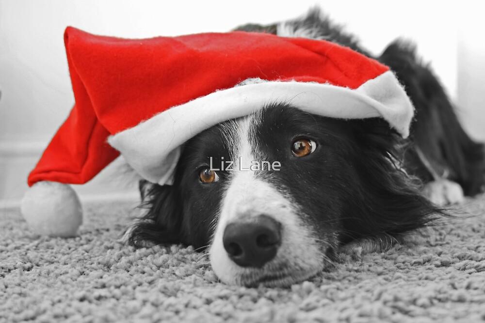 Border Collie Christmas Card - Santa's Little Helper by Liz Lane